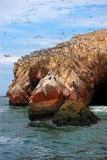 îles Ballestas - Réserve de Paracas