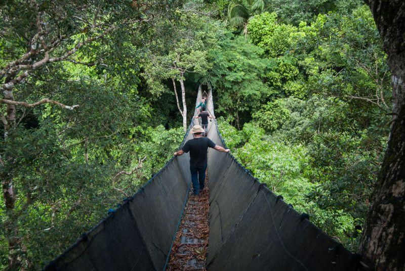 Canopy walk - Amazonie Pérou