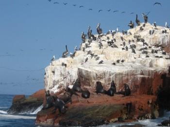 Iles Ballestas - Paracas Pérou