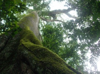 Forêt amazonienne, voyage Pérou