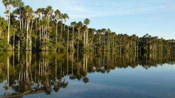 Lac Sandoval, Puerto Maldonado - Amazonie