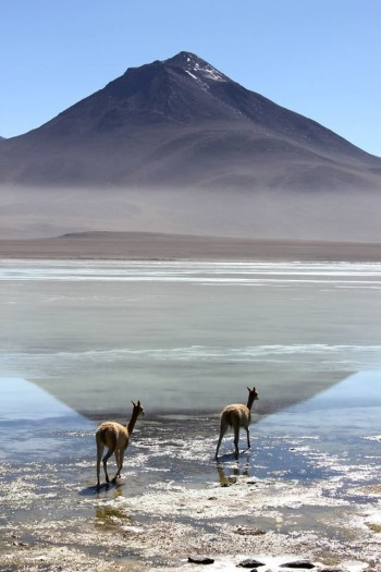 Laguna Blanca - Sud Lipez Bolivie