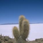 Voyage en Bolivie, Salar de Uyuni