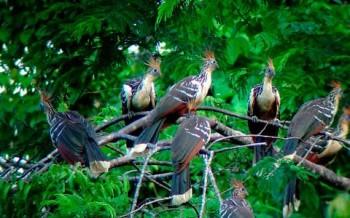 Shanshos - voyage en Amazonie
