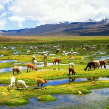 Sur la route du Colca - voyage Pérou