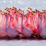 Circuit Bolivie, Flamands roses - Sud Lipez