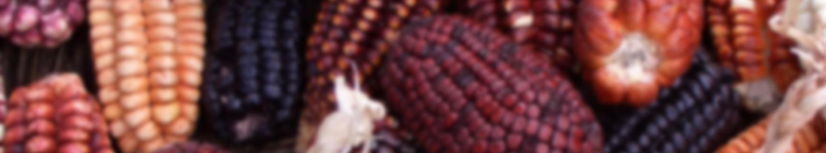 Maïs du Pérou, agence de voyage au Pérou