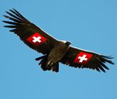 Condor, Paprika Tours avis, voyagiste au pérou