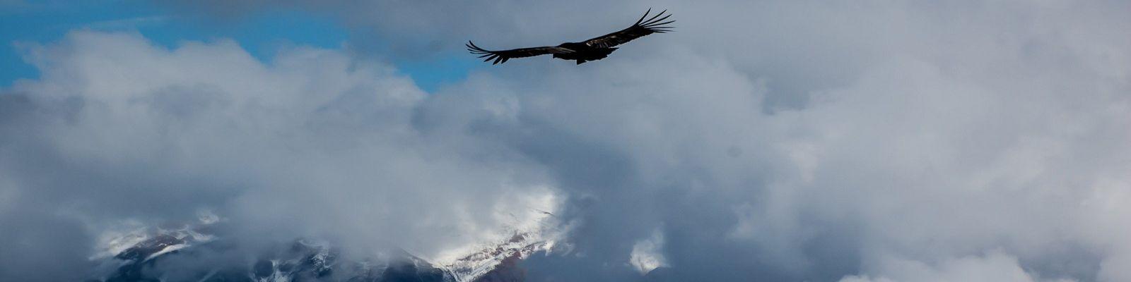 Colca - voyager au Pérou - agence voyage perou bolivie
