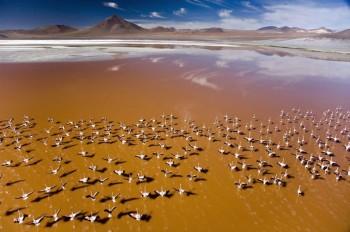 Lagune du Sud Lipez et flamands roses, Bolivie